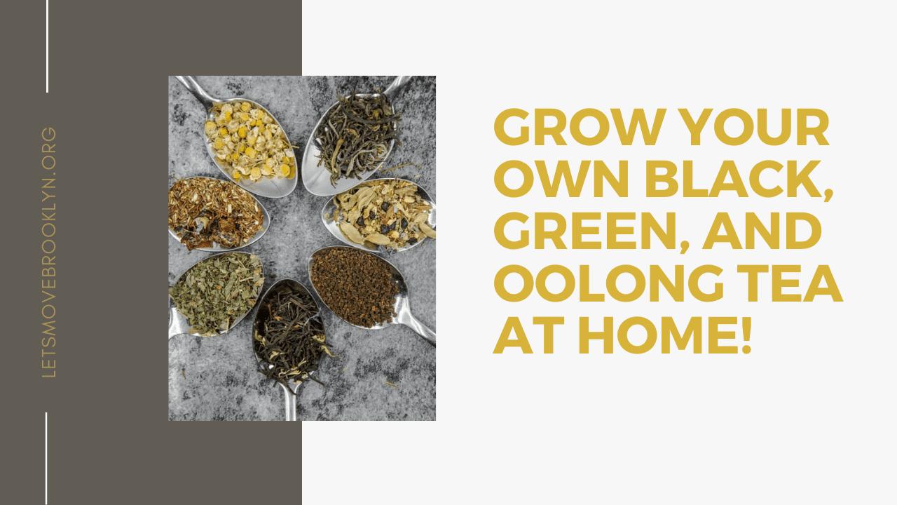 Growing Your Own Tea